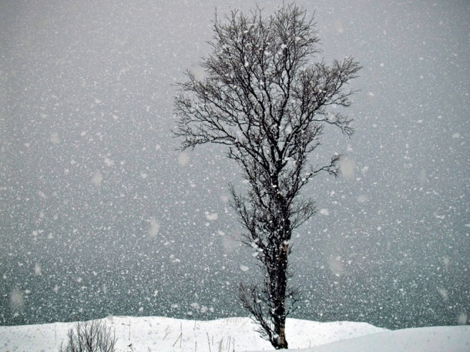 tree_snowing_800