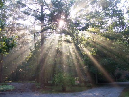 sun-through-trees-am-7-081