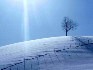 snow-covered-field