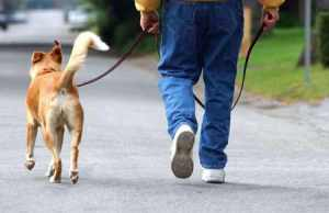 man_walking_dog